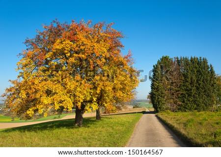 Autumn in Kraichgau/Germany - stock photo