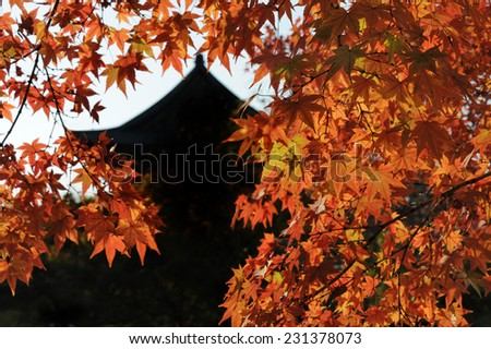 Autumn in Kyoto, Japan. At the background the Toji Temple (Kyo-o-gokukuji)  - stock photo