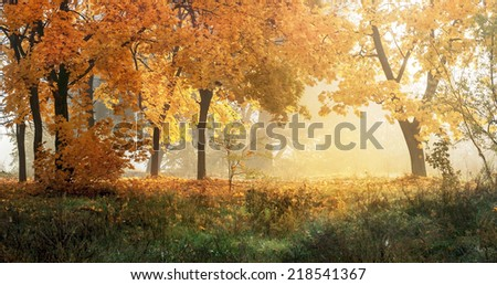 autumn in sunny forest, natural background - stock photo