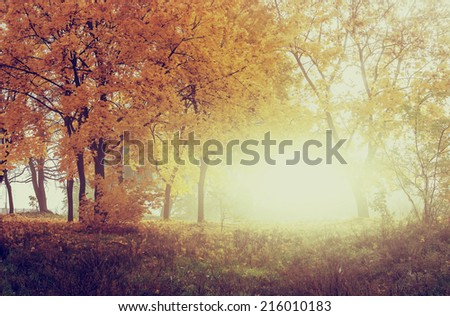 autumn in sunny forest, natural background with instagram effect - stock photo