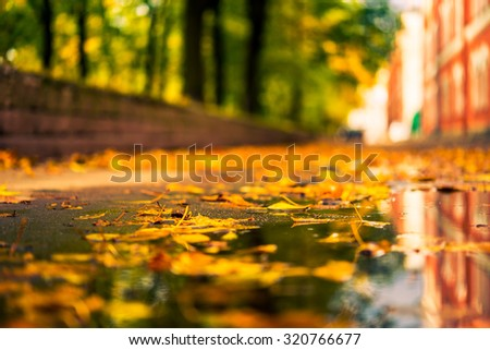 Autumn in the city, puddle in the alley strewn with fallen leaves. View from puddles on the pavement level, image in the orange-blue toning - stock photo