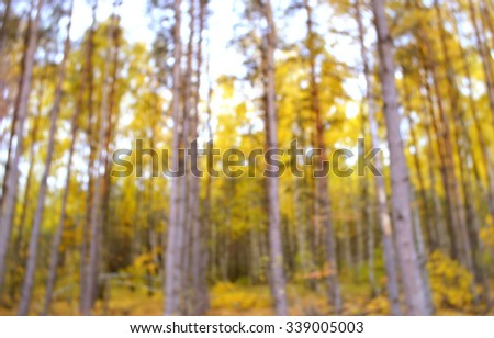 Autumn in the forest.Colorful autumn leaves.Abstract motion blurred trees in a forest - stock photo