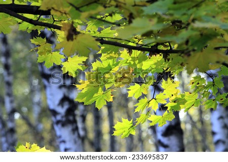 Autumn in the forest in sunny day - stock photo