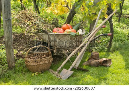 Autumn in the garden - harvest of vegetables pumpkins and nuts - stock photo