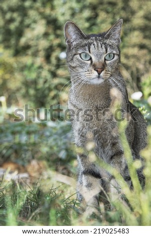 Autumn in the garden sits a colorful cat in the grass near flowers. - stock photo