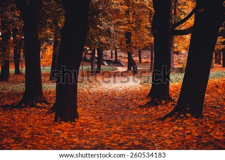 Autumn in the park - stock photo