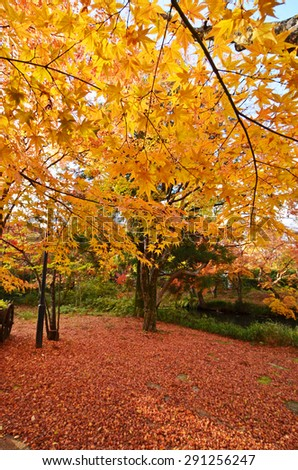 Autumn in the park , Japan  - stock photo