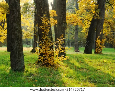 Autumn in the park with oak trees: yellow leaves, green grass - stock photo