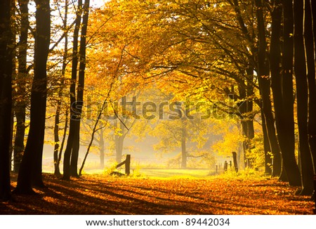 Autumn in the woods in the Netherlands. - stock photo