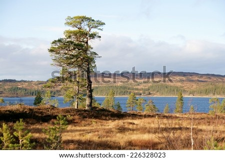 Autumn landscape by a lake - stock photo