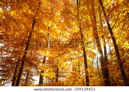 Autumn landscape - Collection of Beautiful Colorful Autumn Leaves - stock photo