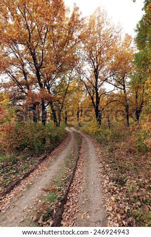 autumn landscape dirt road in an oak grove early sunny morning - stock photo