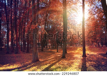 autumn landscape in the city park - stock photo