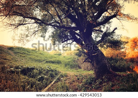 Autumn landscape in the forest - autumn cloudy forest landscape with old tree on the foreground - stock photo