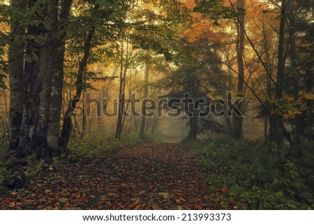 Autumn landscape. Mysterious path leading to the enchanted forest - stock photo