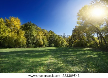 Autumn Landscape. Park in Autumn. Forest in Autumn. Lonely beautiful autumn tree. - stock photo
