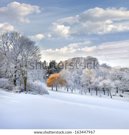 Autumn Landscape. Park in Autumn. The first snow.   - stock photo