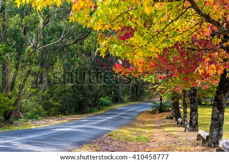 Autumn landscape road with colorful trees on sunny day. Bright and vivid autumn foliage with country road on the background. - stock photo