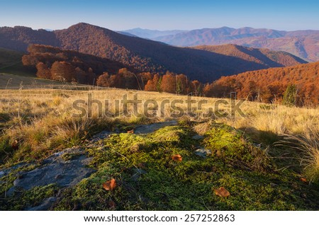 Autumn landscape. Sunny morning in the mountains. Green moss on the stone. Carpathians, Ukraine, Europe - stock photo