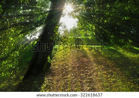 Autumn landscape - sunset in the autumn park , bright rays of sun breaking through the tree branches - stock photo