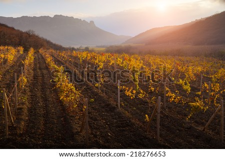 Autumn landscape. The gold foliage of a vineyard is shone in beams of a decline. On a background of mountains and the sky with clouds. - stock photo