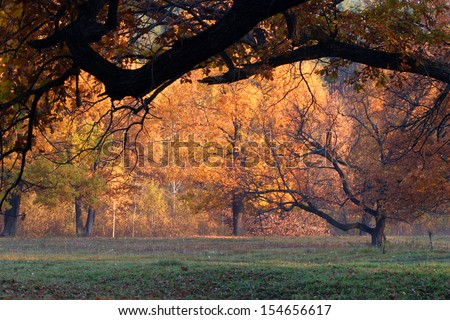 autumn landscape walk in the woods - stock photo