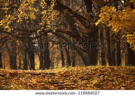 Autumn landscape with a shallow depth of field - stock photo
