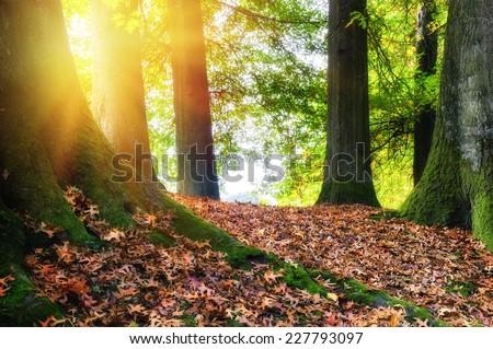 Autumn landscape with big oak tree  - stock photo