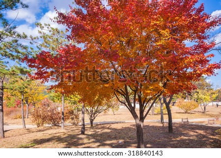 Autumn landscape with maple trees in the park. Seoul,South korea. - stock photo