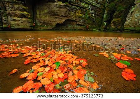 Autumn landscape with orange and yellow leaves in the water, big rock in the background, Kamenice river, in czech national park, Ceske Svycarsko,  Bohemian Switzerland park, Czech Republic - stock photo