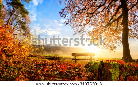 Autumn landscape with the sun warmly illumining a bench under a tree, lots of gold leaves and blue sky - stock photo