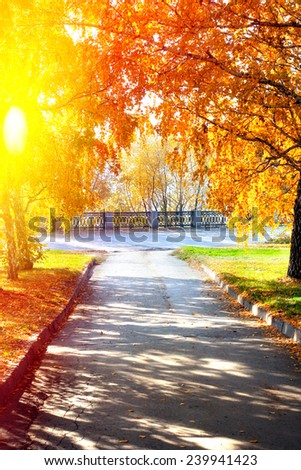 autumn landscape with the trees and small track - stock photo