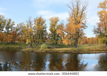 autumn landscape yellowed foliage of oak trees in the grove near the river on a cloudy day - stock photo