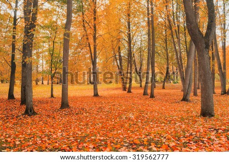 Autumn landscape - yellowed trees in city park in cloudy weather   - stock photo