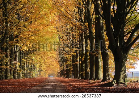 Autumn lane in the forest, Drenthe, The Netherlands - stock photo