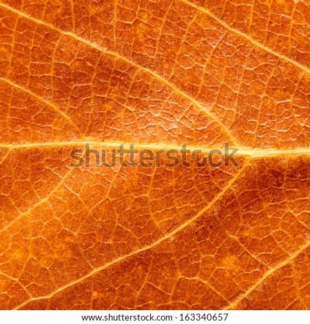 autumn leaf as a background. macro - stock photo