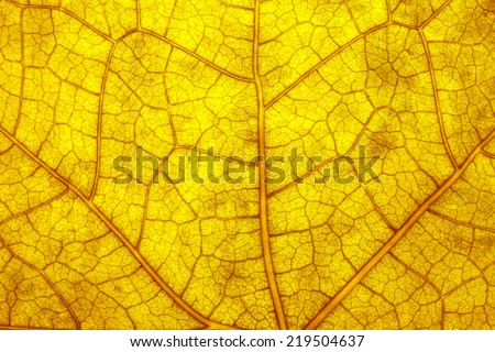 Autumn Leaf./ Autumn Leaf. - stock photo