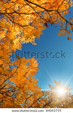 Autumn leaf in sky. Nature composition. - stock photo