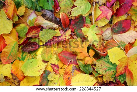Autumn leaf mix - stock photo
