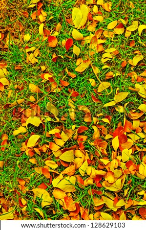 Autumn leaf on green grass background. - stock photo