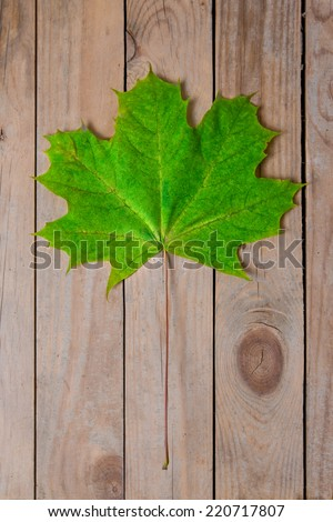 Autumn leaf on the wood - stock photo