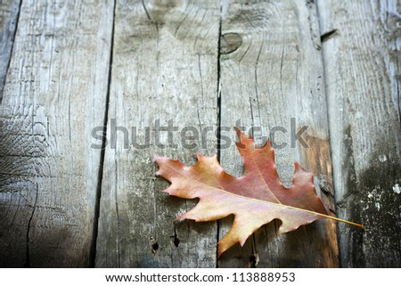 Autumn leaf on wooden boards background - stock photo