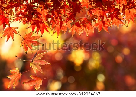 Autumn Leaf. Season Concept. Can be Use for Background - stock photo