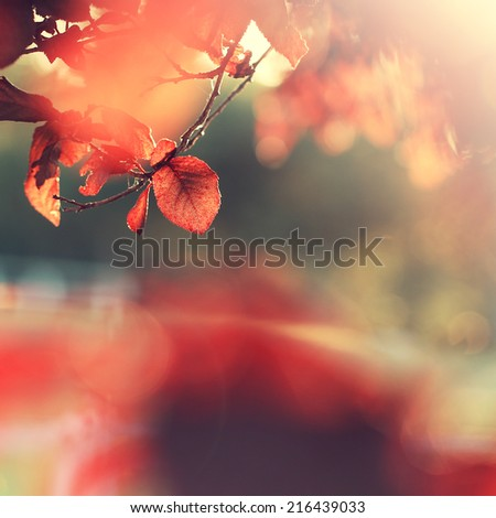autumn leaf sunny background - stock photo