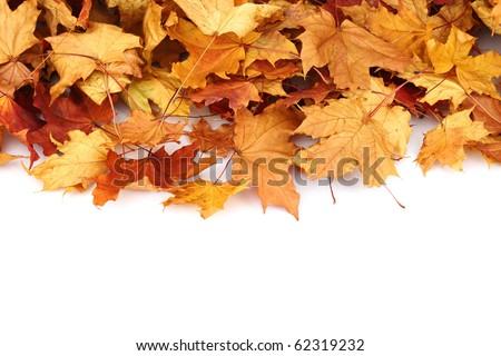 autumn leafs isolated - stock photo