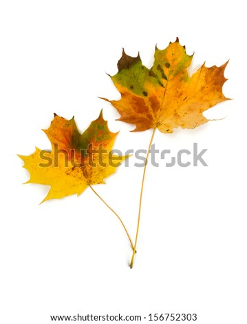 autumn leafs isolated on white - stock photo