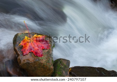 autumn leave with waterfall - stock photo