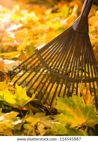 Autumn leaves and a rake on back-light, vertical format - stock photo