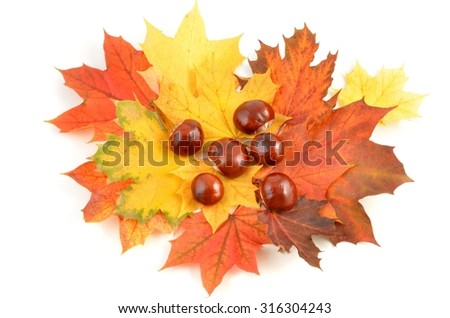 autumn leaves and chestnuts isolated on white background - stock photo