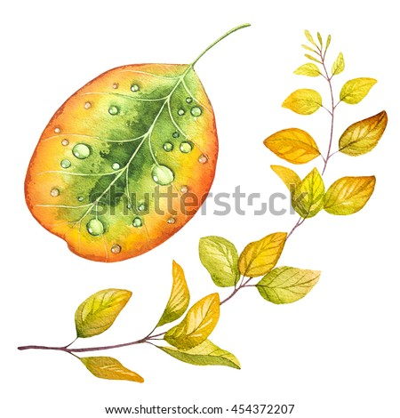 Autumn leaves and flowers. Watercolor illustration. - stock photo